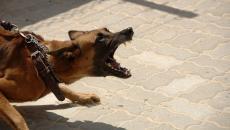 تفسير حلم الكلاب تطاردني.jpg