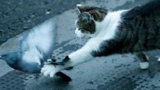 القط لاري.jpg