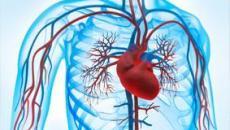 الاوعية الدموية