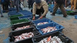 بيع السمك بغزة.jpg