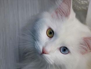 قطط.jpg