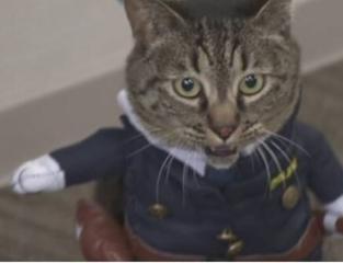 قط شرطي في اليابان.jpg