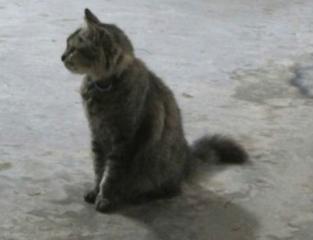 قطة.jpg