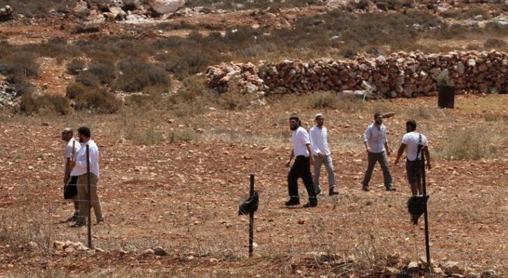 مستوطنون يقطعون اشجار زيتون.jpg