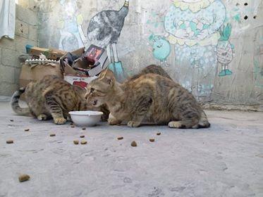 قطط4.jpg
