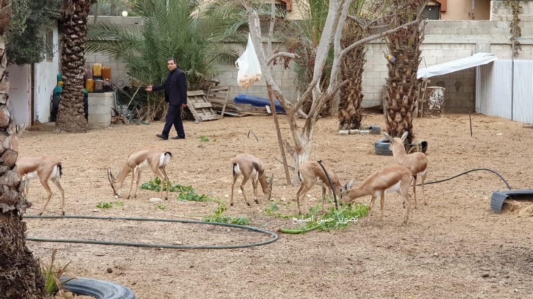 تربية الغزلان بغزة علاء الدين الاعرج.jpg