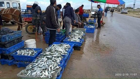 اسماك غزة3.jpg