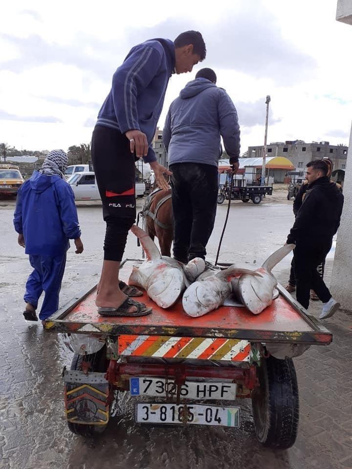 اسماك غزة4.jpg